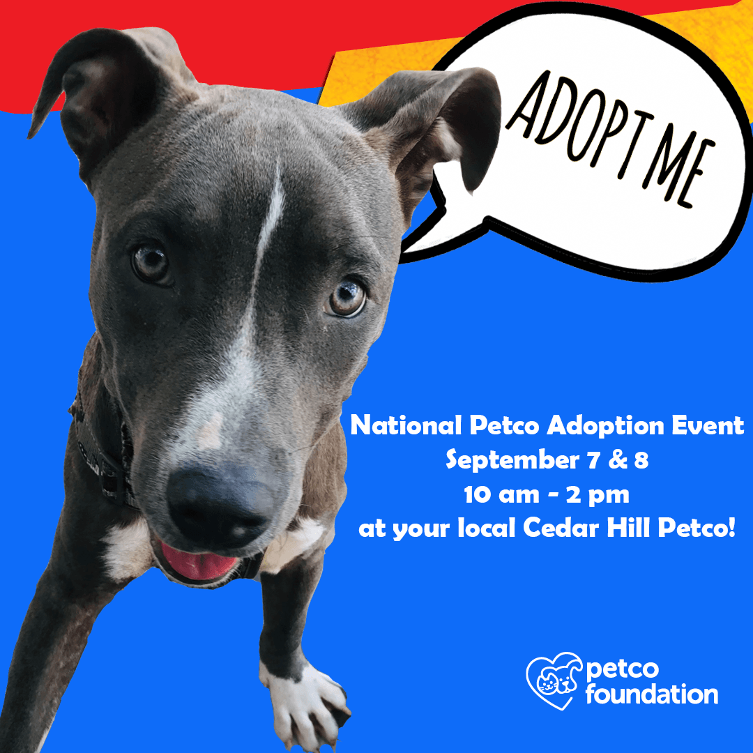 National Petco Adoption Weekend