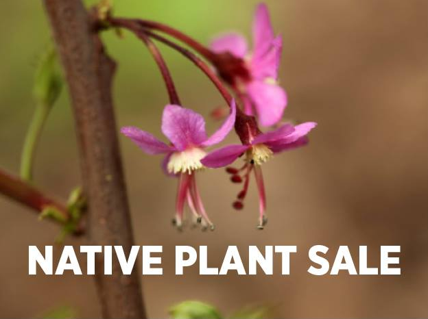 Native Plant Sale Opens in new window